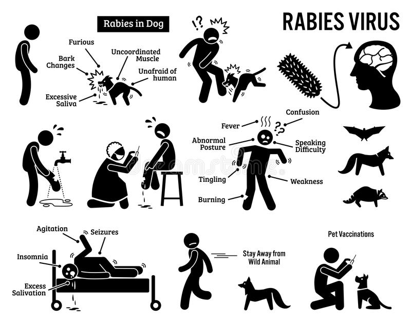 Virus de rabia en Clipart humano y animal stock de ilustración