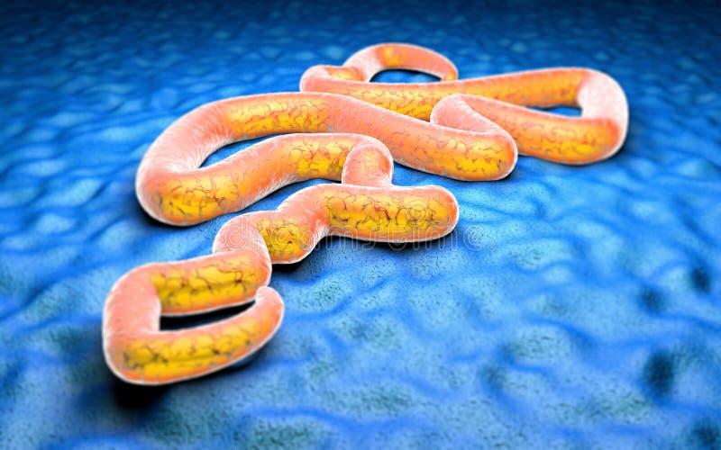 Virus Ebola sous un microscope illustration stock