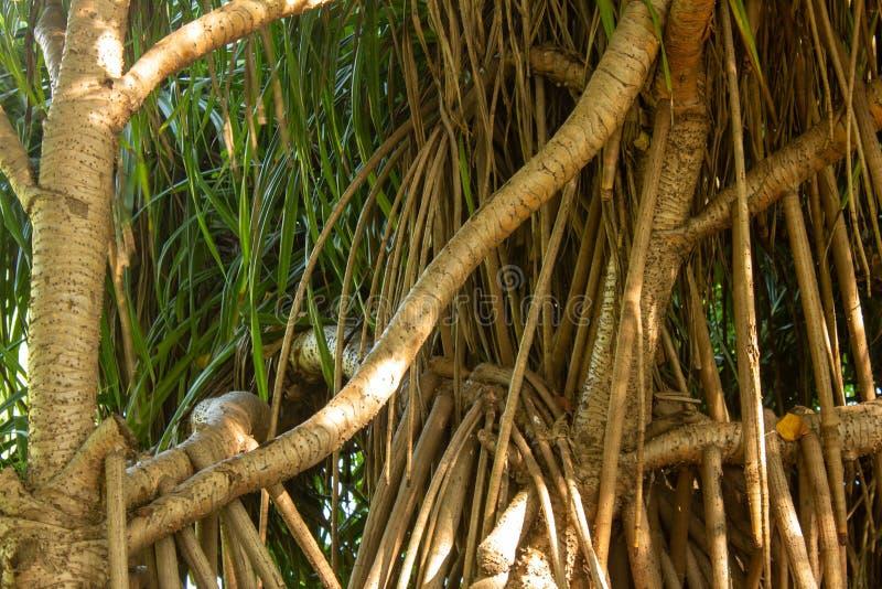 Visão do crescimento de árvores perto do estuário em Chennai, Índia imagem de stock