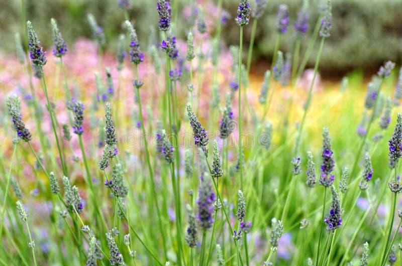 Visão geral do jardim de flores com plantas no Reino Unido imagens de stock royalty free