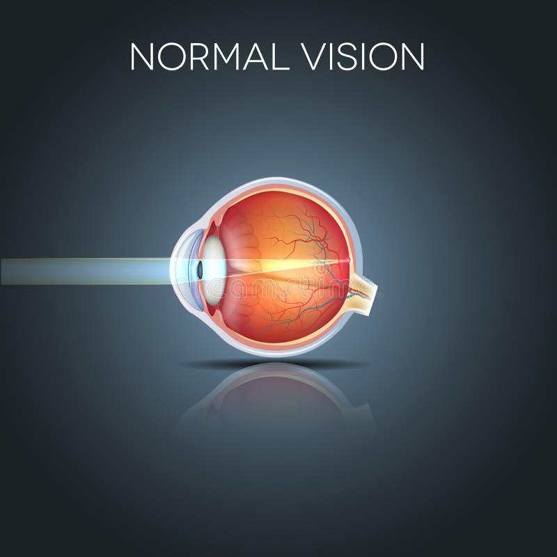 Visão normal do olho ilustração royalty free
