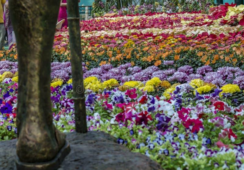 Visão super: Lalbagh flor mostra janeiro de 2019 imagem de stock royalty free