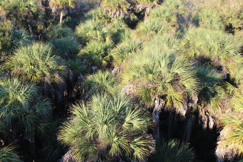 Visão superior das palmeiras, Sarasota, Flórida foto de stock royalty free