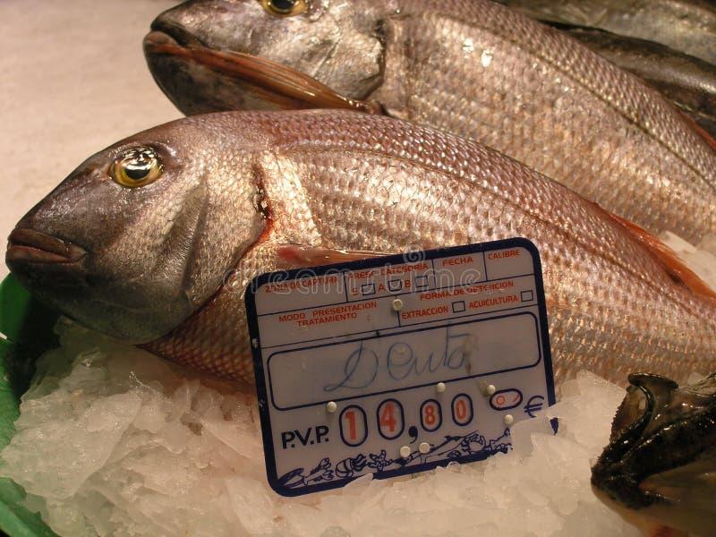 Download Vis foto de stock. Imagem de marinho, alimento, preço, peixes - 113844