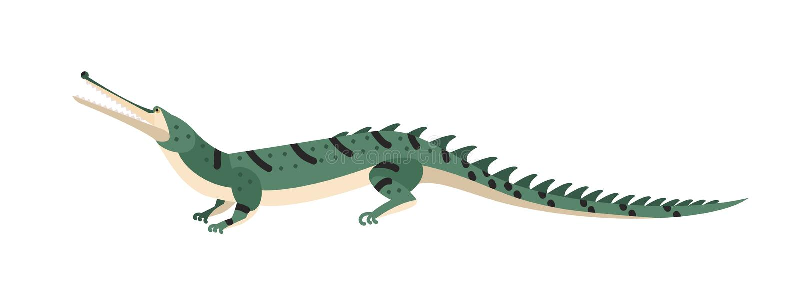 Vis-etend krokodil of gharial op witte achtergrond wordt geïsoleerd die Gevaarlijk exotisch roofzuchtig reptiel Wilde vleesetend royalty-vrije illustratie