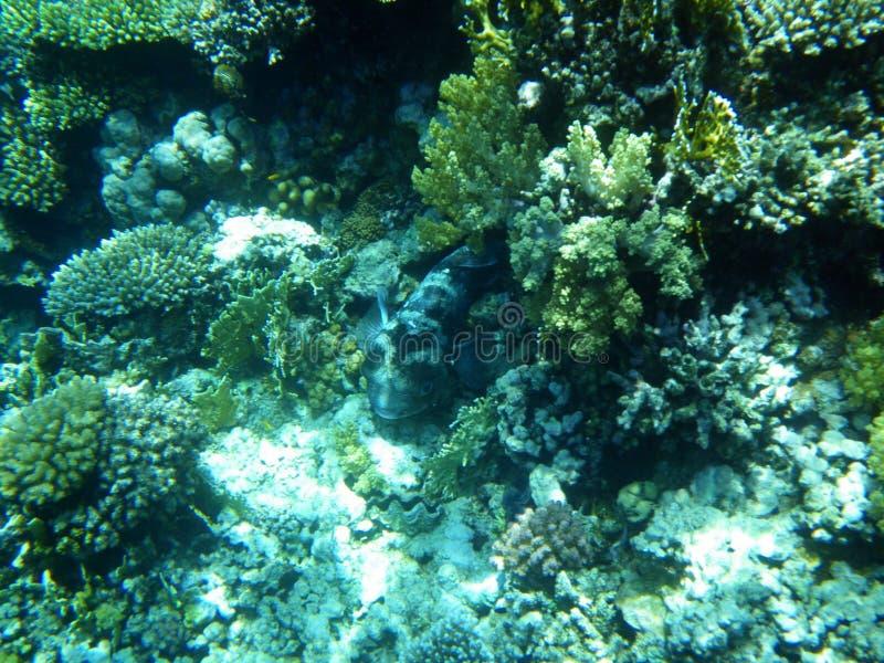 Vis-tank van koralen. royalty-vrije stock foto's