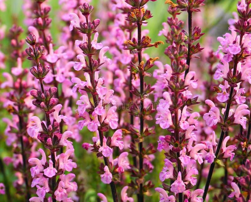 Visa blommor för härlig äng tätt upp royaltyfri foto