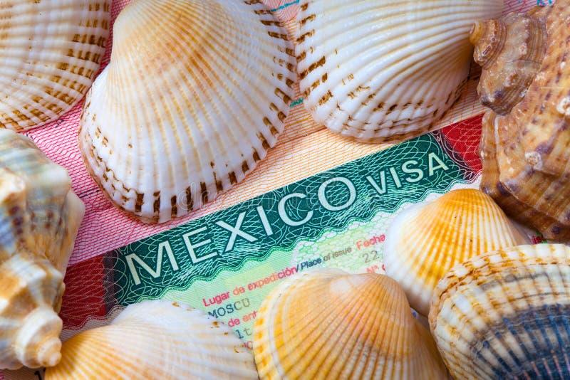 visa för cockleshellsmexico hav fotografering för bildbyråer
