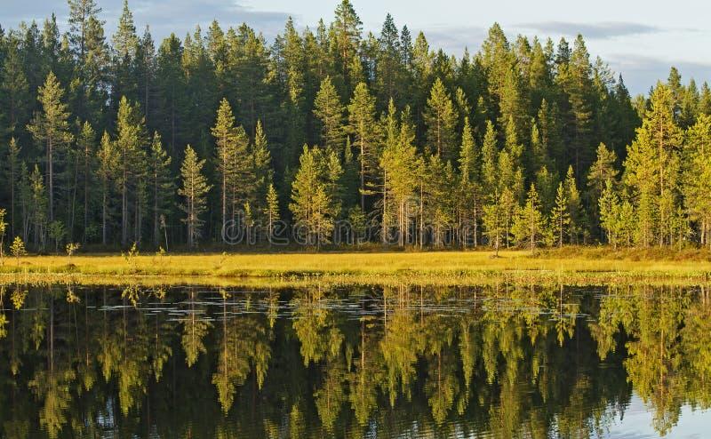 Visa höstskogen i vatten arkivfoto