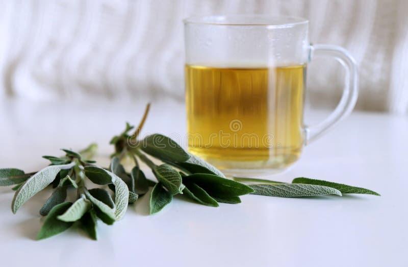 Visa te- och vis mansidor Avkok som göras från visa sidor Medicinska örtSalvia officinalis Begreppet av sunt royaltyfri bild