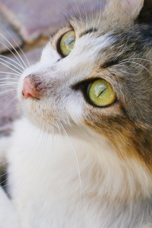 Visage 02 de chat photographie stock libre de droits