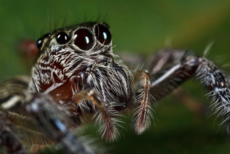 Visage branchant d'araignée photo libre de droits