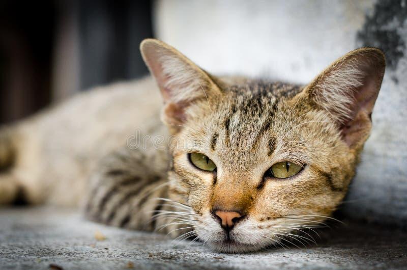 Visage brun en gros plan de chat sur l'escalier photos stock