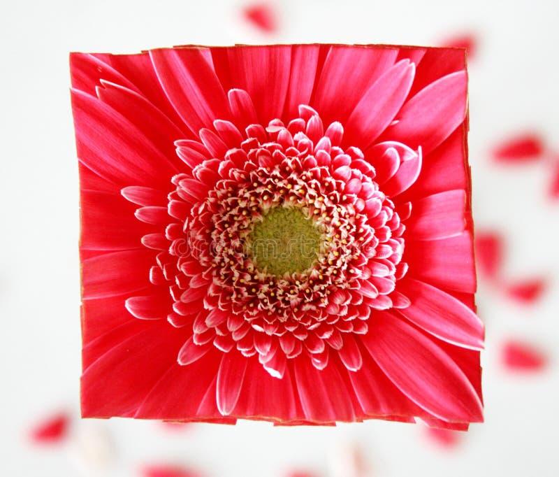 Visage carré de fleur images stock