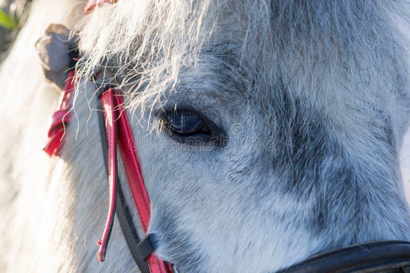Visage d'animal de cheval image stock