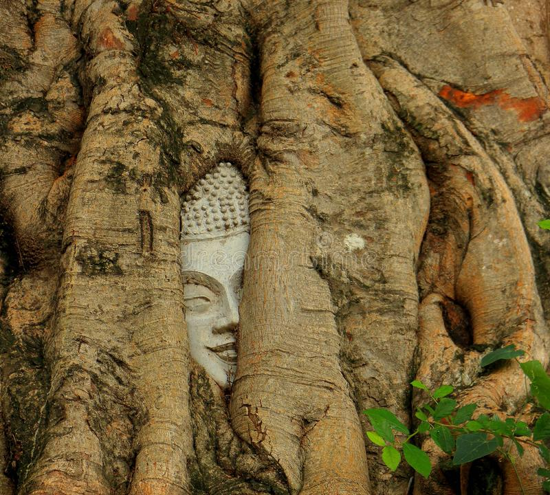 Visage dans l'arbre photos stock
