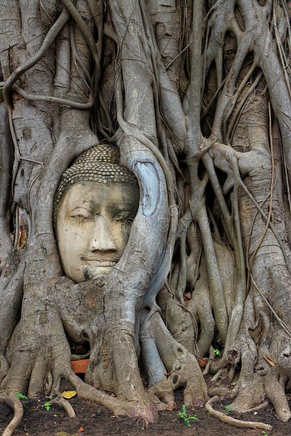 Visage dans l'arbre photos libres de droits