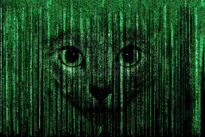 Visage de chat à l'arrière-plan de Matrix illustration de vecteur