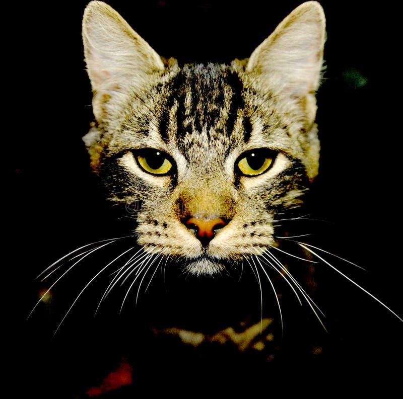 Visage de chat dans l'obscurité image libre de droits