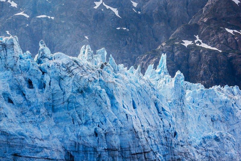 Visage de marée de glacier en stationnement national de baie de glacier. photo libre de droits