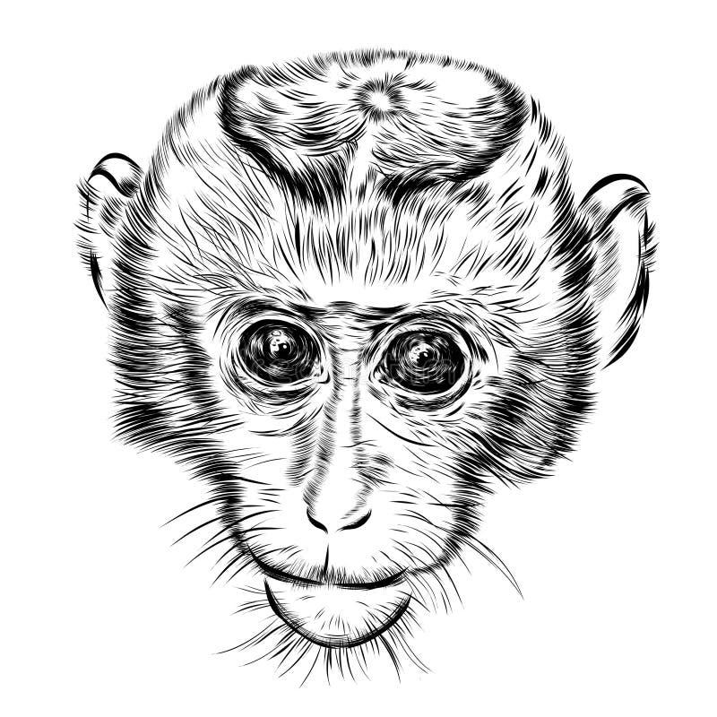 Visage de singe de croquis Vecteur tiré par la main de griffonnage illustration stock