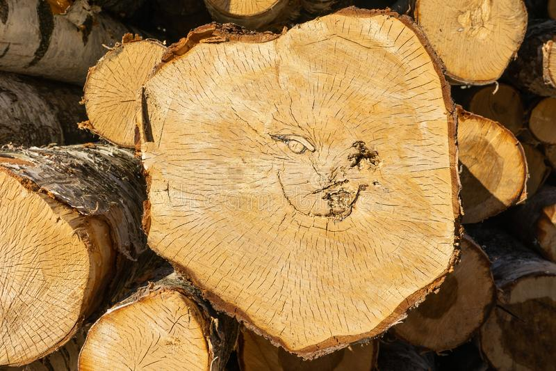 Visage de sourire Plan rapproché des troncs d'arbre sciés photographie stock libre de droits