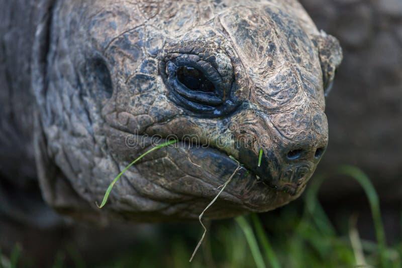 Visage de tortue géante photos stock