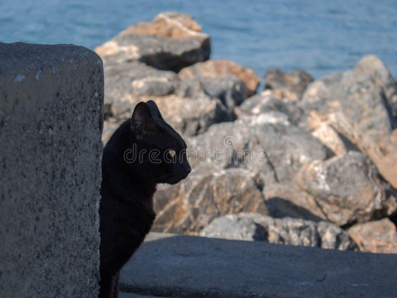 Visage latéral de chat noir à la mer photo stock