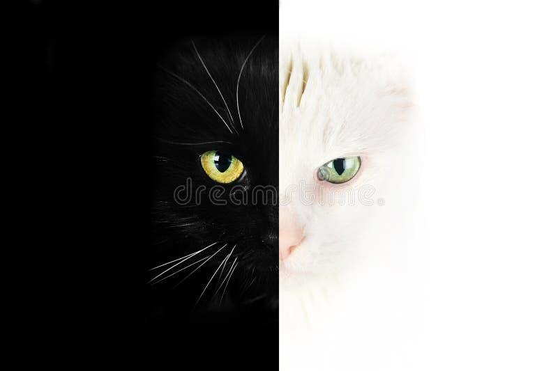 Visage noir et blanc de chat photo libre de droits