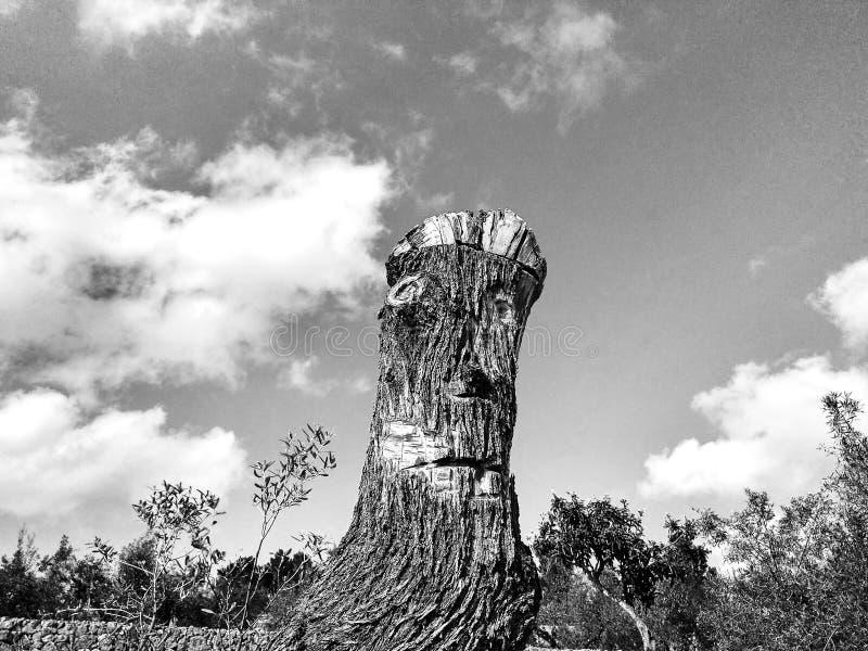 Visage sur un arbre noir et blanc photos stock