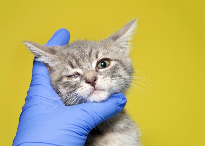 Visage toujours enfilé de gants de participation de main sur le chaton avec le défaut congénital d'oeil photographie stock libre de droits