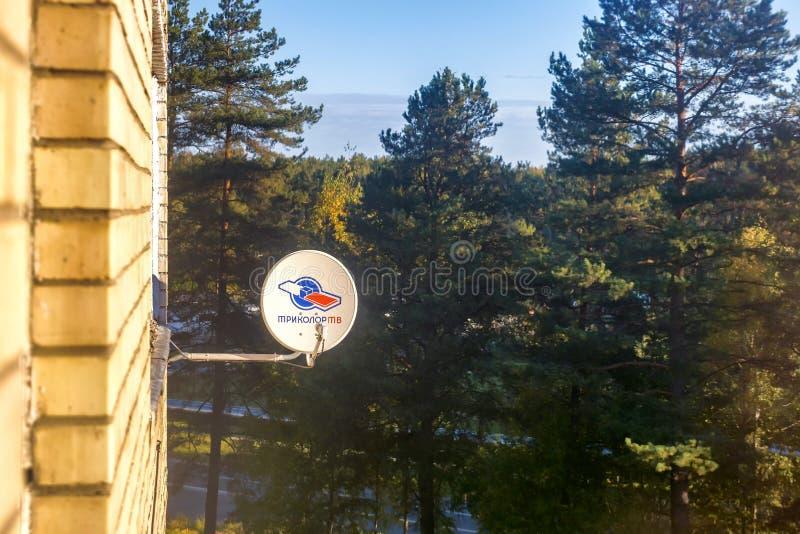 Visaginas la Lituania 1° ottobre 2018: Piatto aereo satellite tricolore dell'antenna sul muro di mattoni sopra il legno di pino fotografia stock libera da diritti