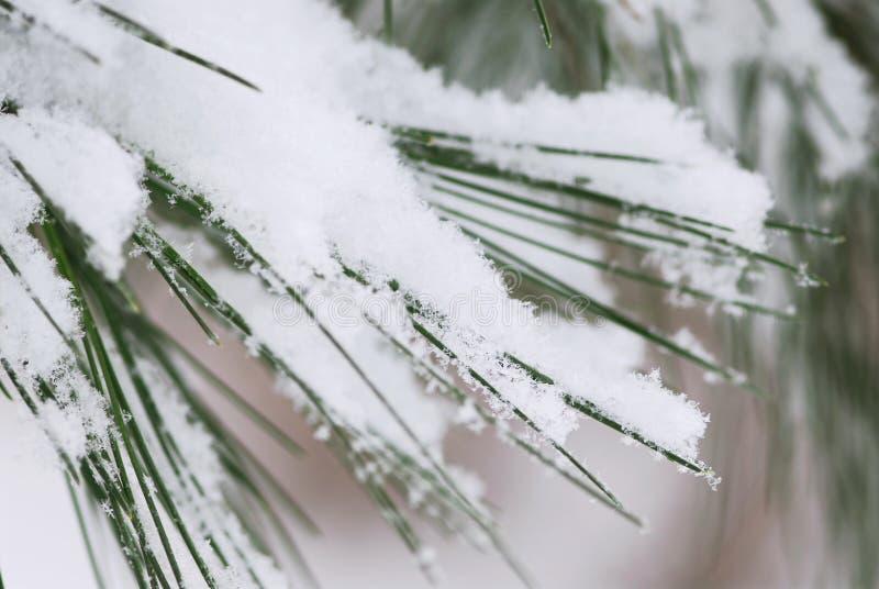 visare sörjer snow royaltyfria foton