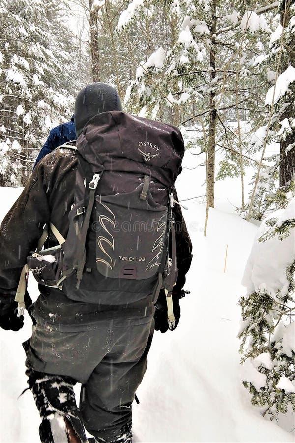 Visarend daypack in de winteronweer stock afbeelding