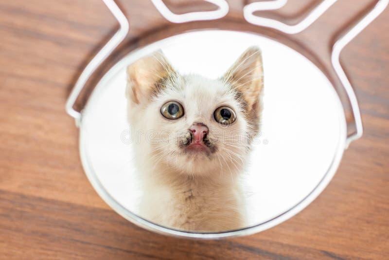 Visat i en rund spegel av en liten vit kitten_ arkivfoto