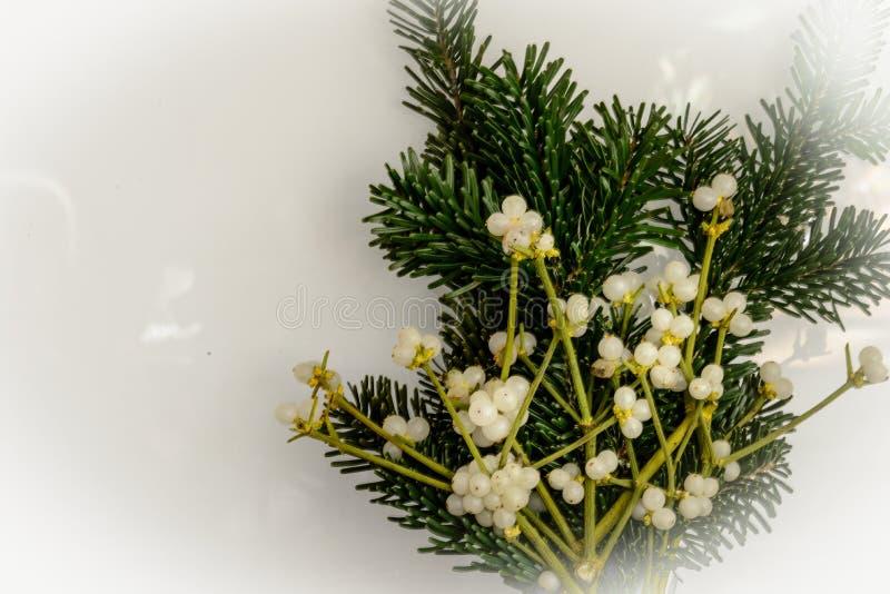 Visco do Natal: ramalhete tradicional imagem de stock