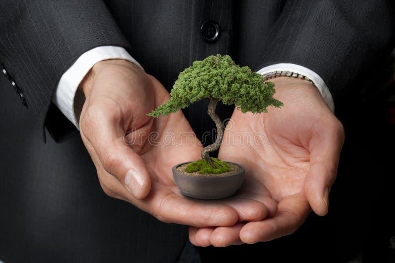 vishet för tree för bonsaiaffärsadministration royaltyfria bilder