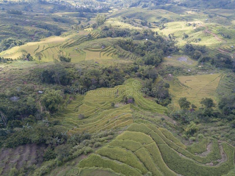 Visión aérea que mira abajo los campos del arroz fotos de archivo