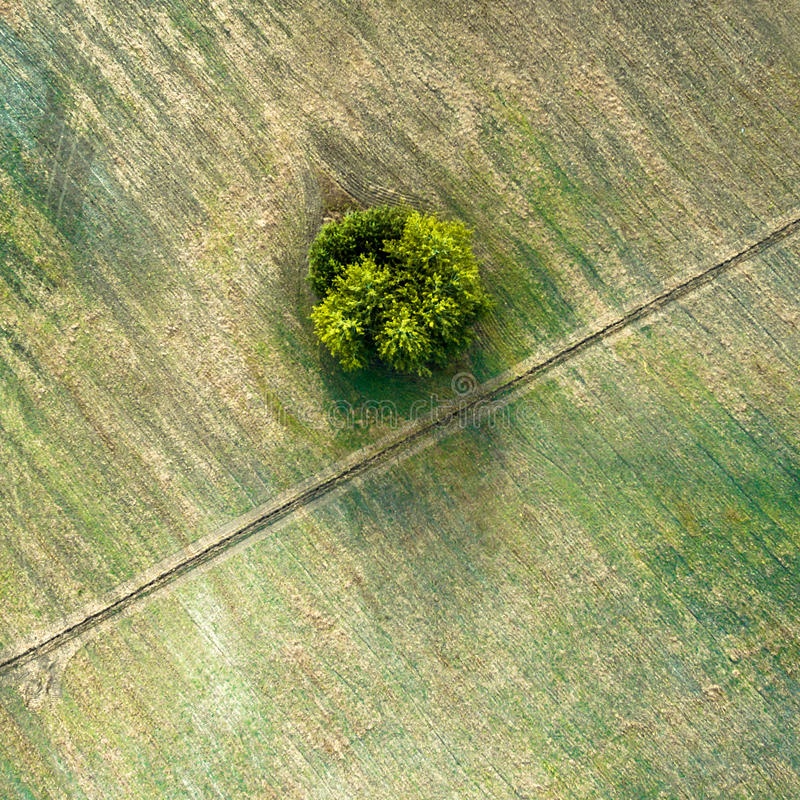 Visión aérea sobre campos biselados agrícolas, el camino diagonal y el árbol imagen de archivo