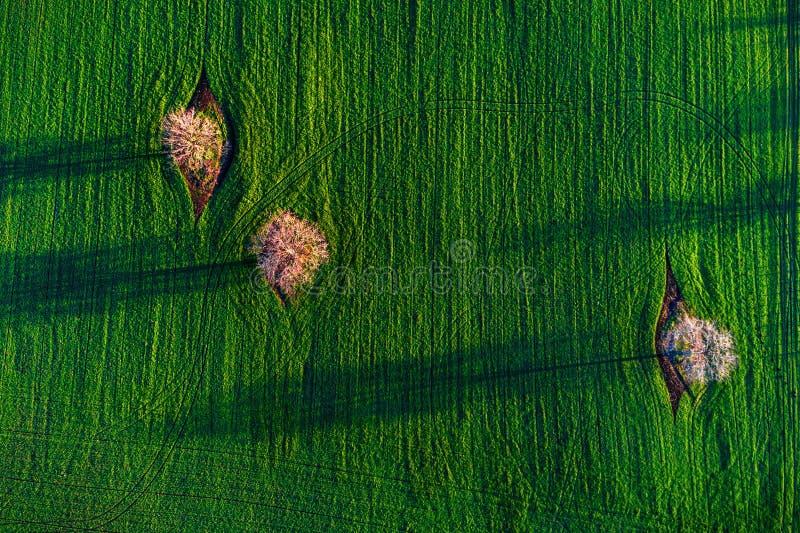 Visión aérea sobre campos y árbol agrícolas con sus sombras imágenes de archivo libres de regalías