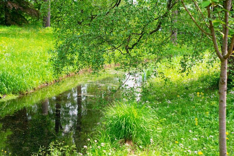 Visión de un pequeño río estrecho y cerca de árboles crecientes en un día caliente de la primavera o de verano imagenes de archivo