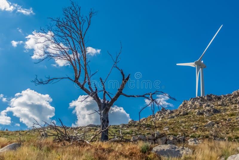 Visión del árbol quemado y rota, resultado de los fuegos, en la cima de las montañas de Caramulo, con la turbina de viento como f foto de archivo libre de regalías