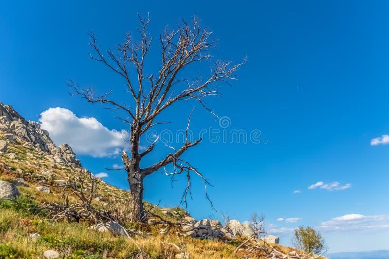 Visión del árbol quemado y rota, resultado de los fuegos, en la cima de las montañas de Caramulo foto de archivo