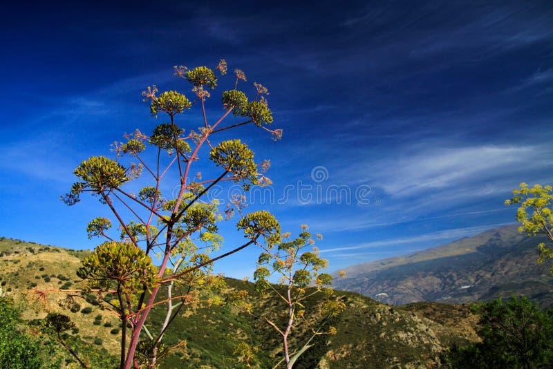 Visión desde arriba de una montaña en el valle debajo del cielo azul en Sierra Nevada, provincia Andalucía fotos de archivo