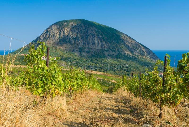 Visión desde el viñedo descuidado en una montaña del oso cerca del centro turístico de Gurzuf foto de archivo
