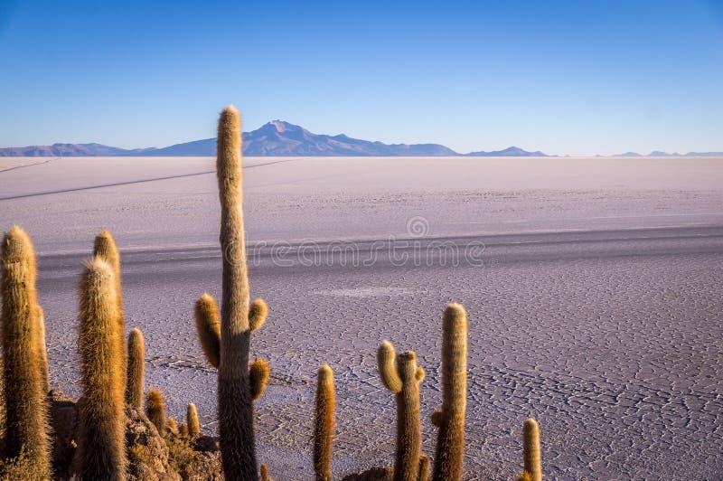 Visión desde Isla Incahuasi, Uyuni, Bolivia fotos de archivo