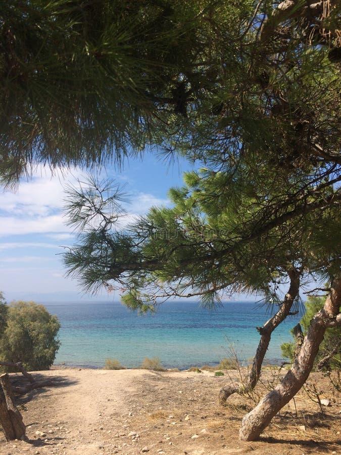 Visión desde la playa al mar azul a través de árboles coníferos Grecia foto de archivo
