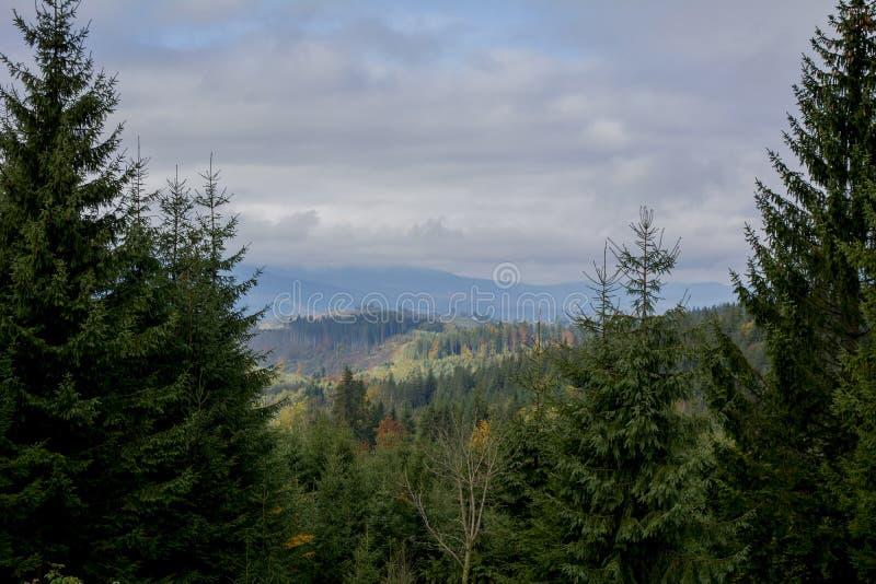 Visión desde la tapa de la montaña Cuestas y colinas verde oscuro de los Cárpatos Vista agradable de las montañas El sol se levan fotografía de archivo