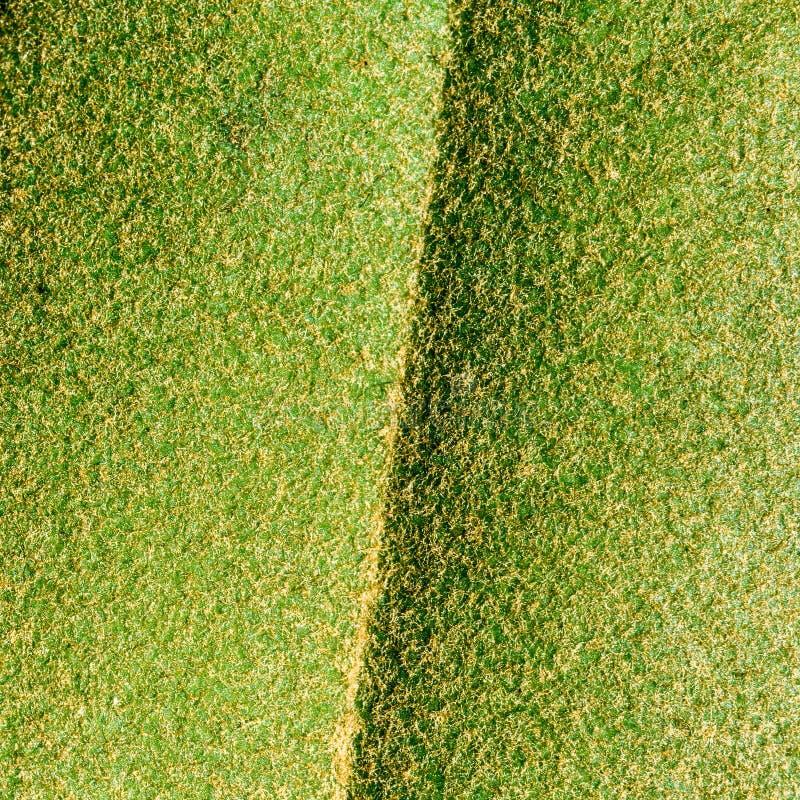 Visión detallada, vista macra de una hoja verde con los pelos marrones finos fotografía de archivo