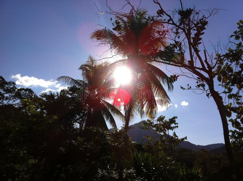 Visión en la selva tropical en Perú fotografía de archivo